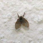 Mosquito de banheiro