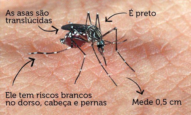 mosquinto-da-dengue