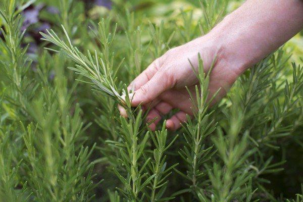 Plantas Daninhas