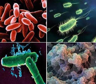 bacterias(1)