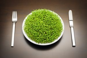 chlorella-nutrition