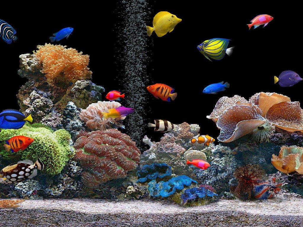 Resultado de imagem para aquarios