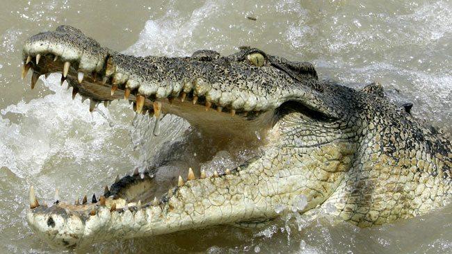croc-3