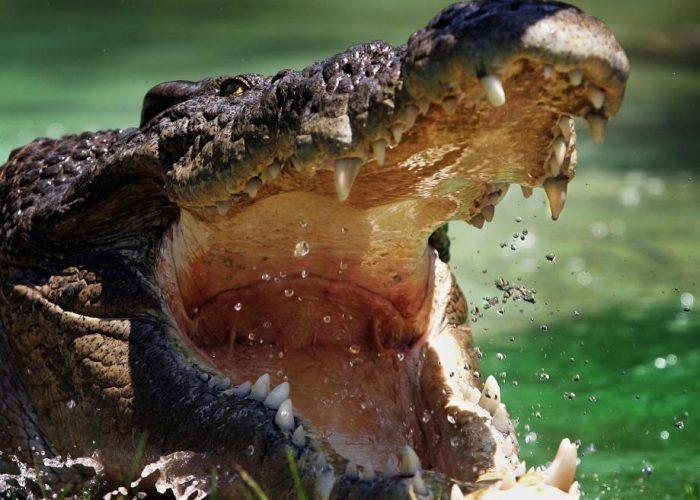 croc-5