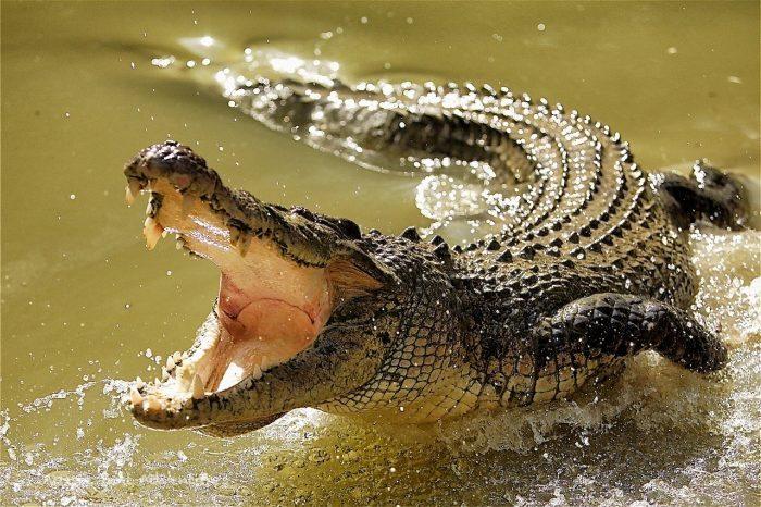 croc-8