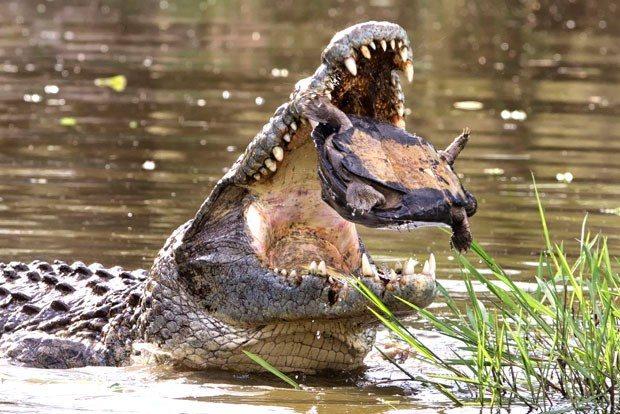 croc10