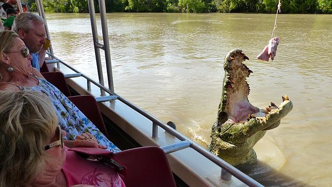 croc14