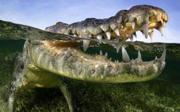 croc19