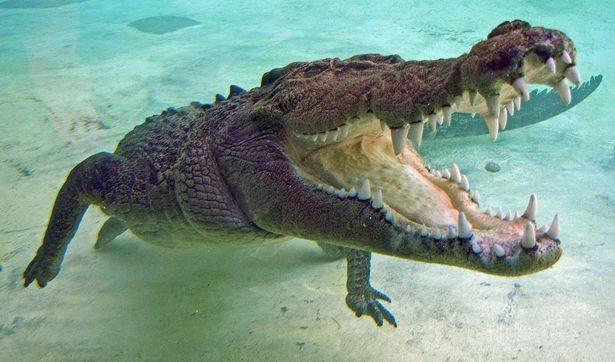croc21