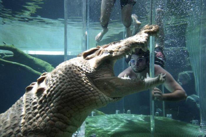 croc5