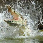 20 Fotos assustadoras de Jacarés e Crocodilos