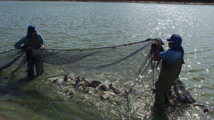 Extrativismo Animal no Brasil