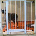 Portão para Cachorro